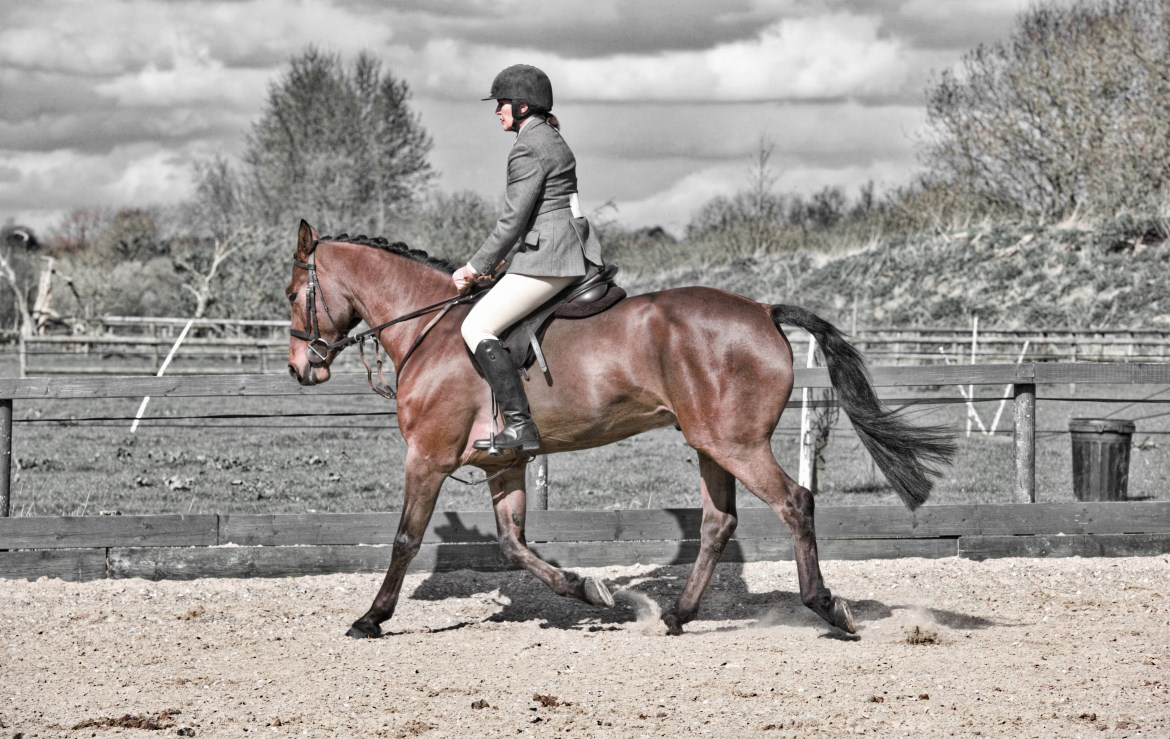 Hunter at Hargate Chesnut horse with rider and background in black & white